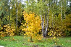 Осень 14 на Истре 044